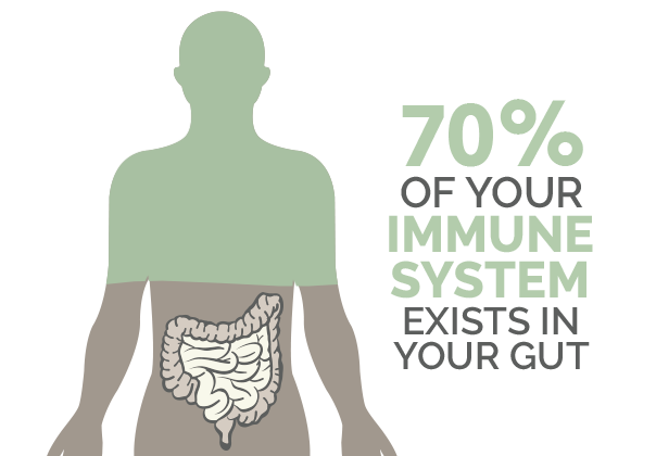 immune system in your gut