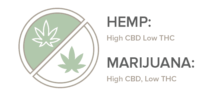 thc vs cbd marijuana vs hemp